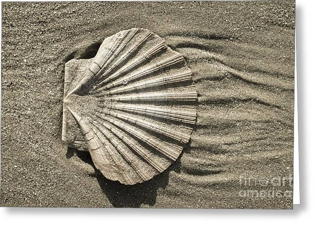 Sculptural Decoration Greeting Cards - Shell Greeting Card by Carol Weitz