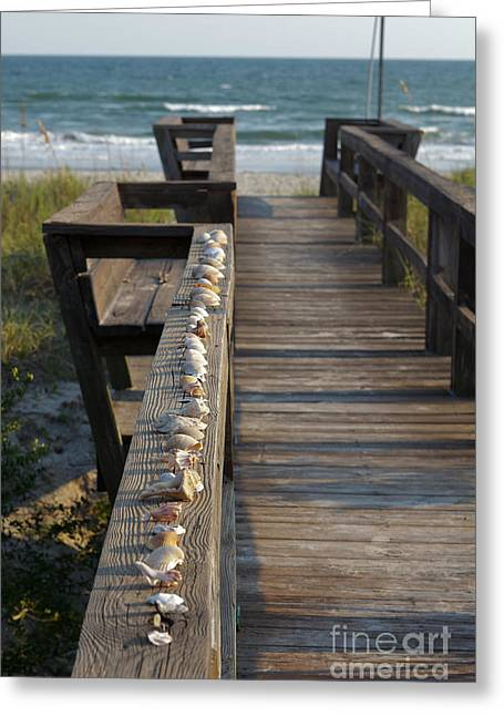 Sea Oats Greeting Cards - Shell Collection Greeting Card by Kay Pickens