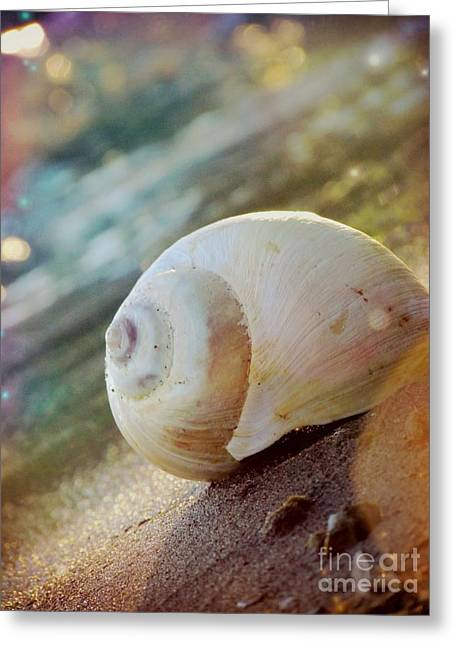 Abstract Nature Greeting Cards - Shell Greeting Card by France Laliberte