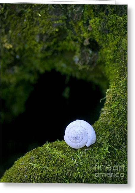 Jonathan Welch Greeting Cards - Shell Greeting Card by Jonathan Welch