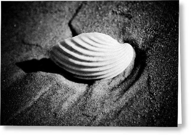 Stones Pyrography Greeting Cards - Shell on Sand black and white photo Greeting Card by Raimond Klavins
