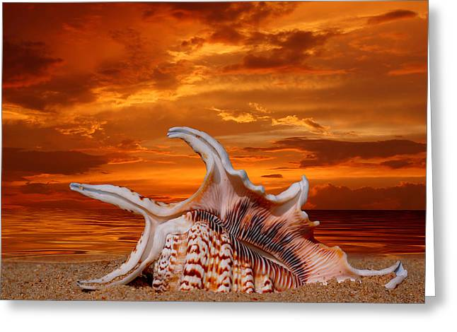 Seashell Pyrography Greeting Cards - Shell on Sand Greeting Card by Boon Mee