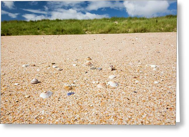 Shell Sand On The Beach With Limpet Shell Greeting Card by Ashley Cooper