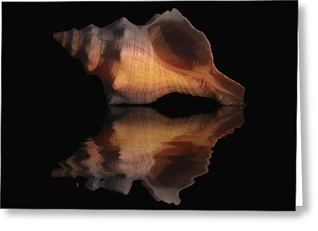 Sea Shell Digital Art Photographs Greeting Cards - Shell Series Reflection II Greeting Card by Brian Middleton