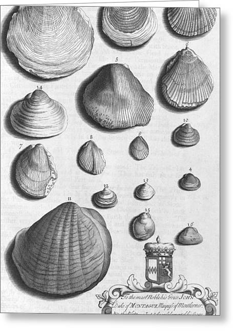 Northamptonshire Greeting Cards - Shell specimens, 18th century Greeting Card by Science Photo Library