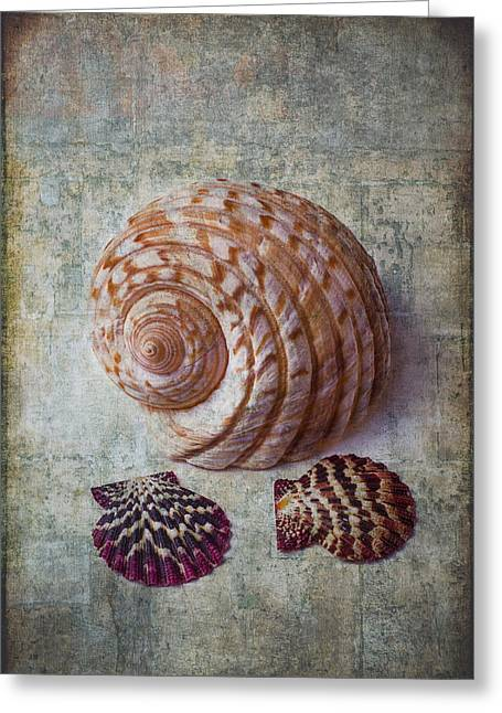 Shell Texture Greeting Cards - Shell Texture Greeting Card by Garry Gay