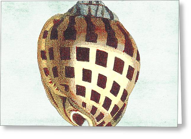 Colored Shell Digital Art Greeting Cards - Shell Treasure-B Greeting Card by Jean Plout