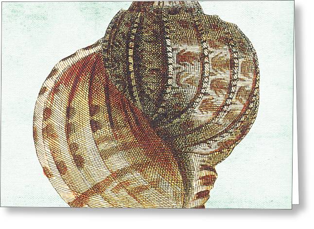 Colored Shell Digital Art Greeting Cards - Shell Treasure-C Greeting Card by Jean Plout