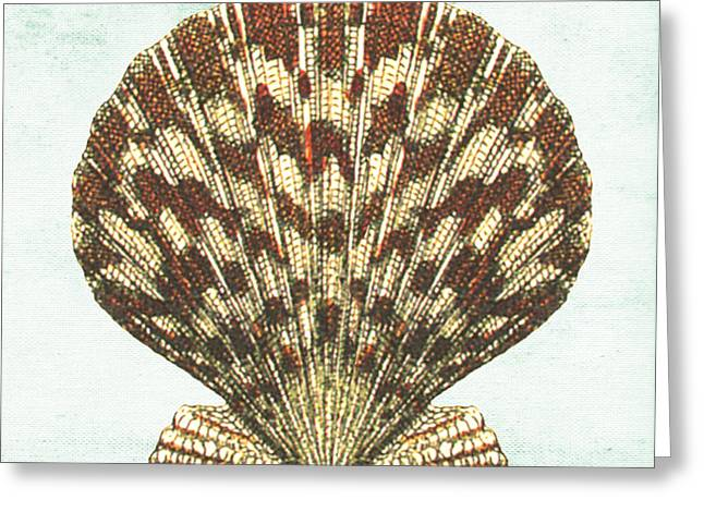 Colored Shell Digital Art Greeting Cards - Shell Treasure-D Greeting Card by Jean Plout
