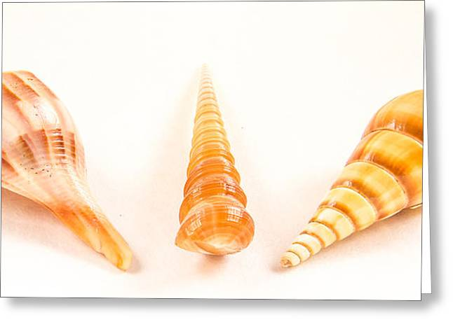 Shell Pattern Greeting Cards - Shell trio Greeting Card by Jean Noren