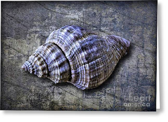 Shell Texture Greeting Cards - Shell With Textures Greeting Card by Walt Foegelle