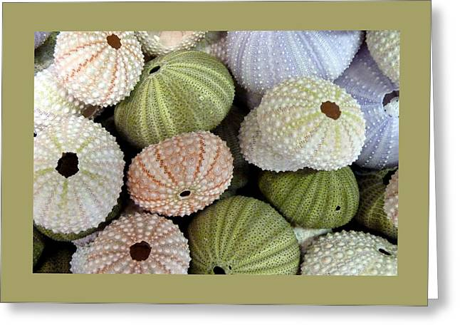 Carla Parris Greeting Cards - Shells 5 Greeting Card by Carla Parris