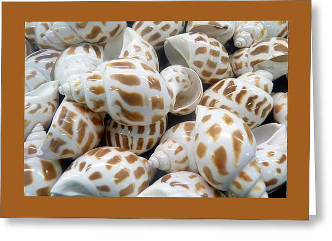 Carla Parris Greeting Cards - Shells - 7 Greeting Card by Carla Parris