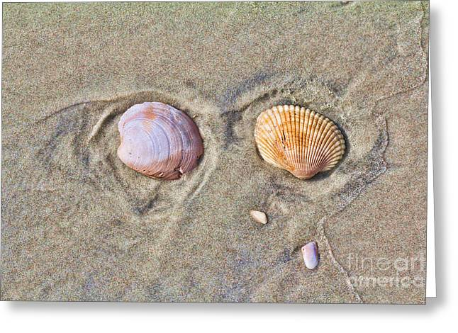 Shell Texture Greeting Cards - Shells and Sand Greeting Card by Deborah Benoit