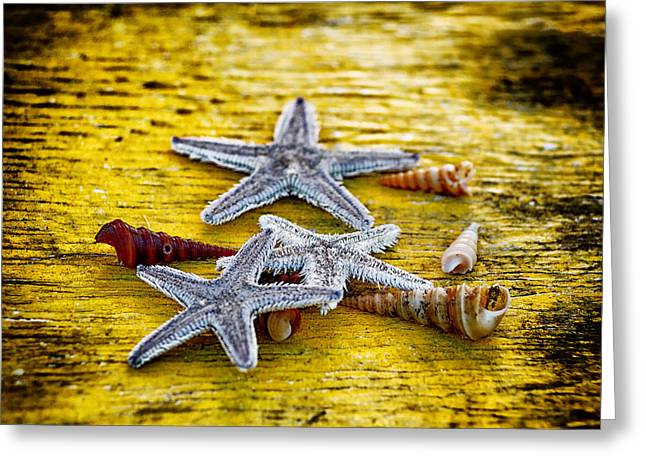 Shells And Starfish Greeting Card by Stelios Kleanthous