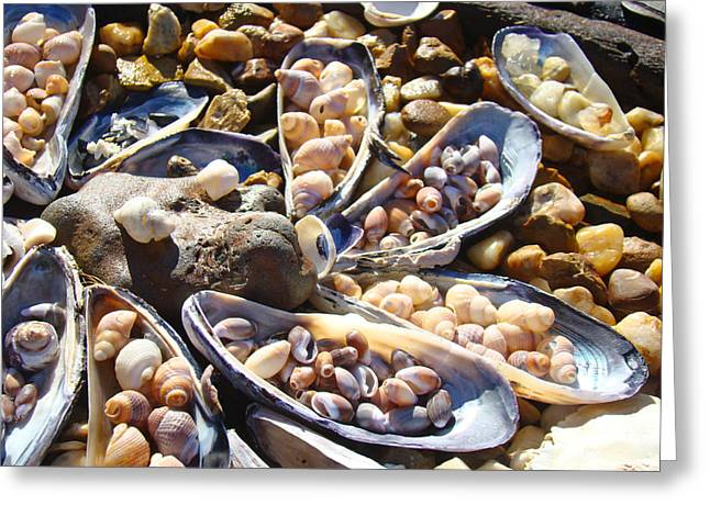 Shells Art Prints Coastal Ocean Seashells Greeting Card by Baslee Troutman