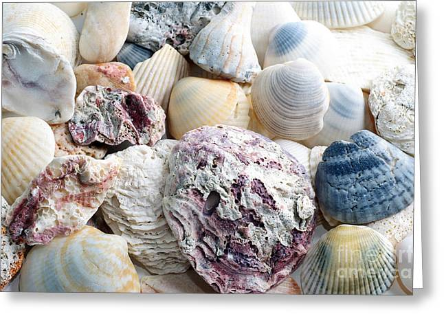 Sea Shell Digital Mixed Media Greeting Cards - Shells From The Sea Greeting Card by Andee Design