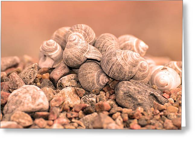 Shell Texture Greeting Cards - Shells in a pile Greeting Card by Toppart Sweden