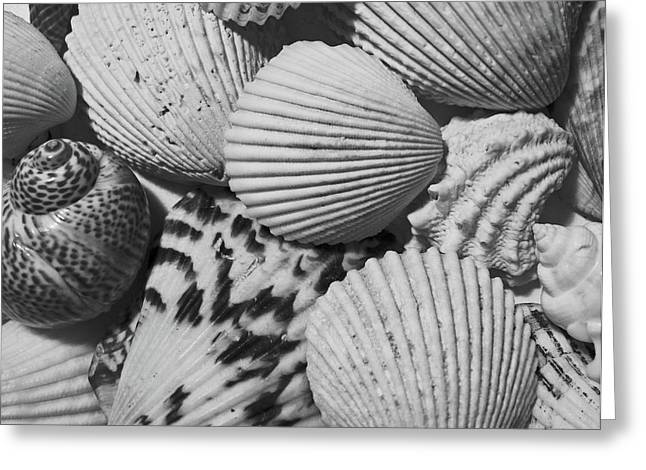 Shell Texture Greeting Cards - Shells in Black and White Greeting Card by Mary Bedy