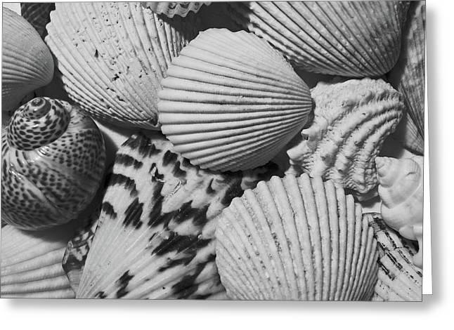 Shells In Black And White Greeting Card by Mary Bedy