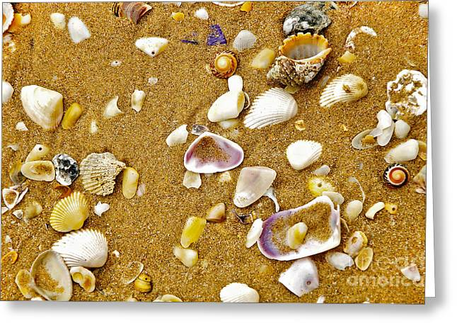 Clam In The Sand Greeting Cards - Shells in the Sand Greeting Card by Kaye Menner
