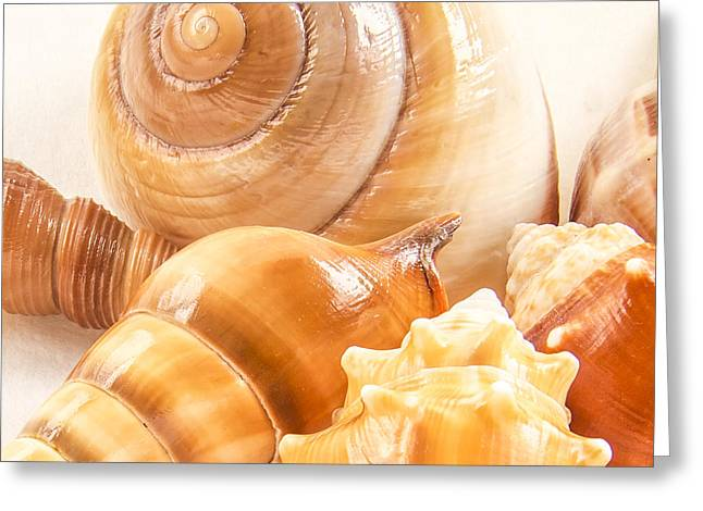 Shell Pattern Greeting Cards - Shells Greeting Card by Jean Noren