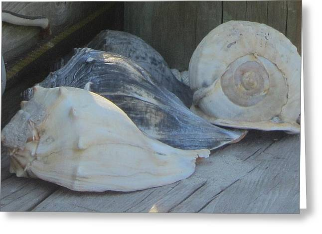 Shells Of Portsmouth Island Greeting Card by Cathy Lindsey