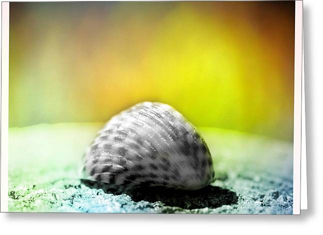 Shell Pattern Mixed Media Greeting Cards - Shells on a rock Greeting Card by Toppart Sweden