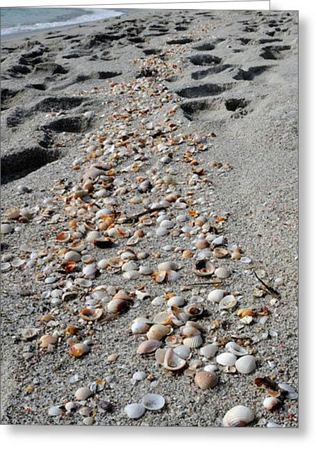 Beach Photography Greeting Cards - Shells On The Beach, La Cinta Beach Greeting Card by Panoramic Images
