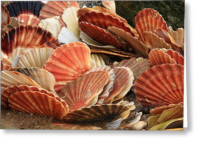 Shell Fish Greeting Cards - Shells On The Shore Greeting Card by Aidan Moran