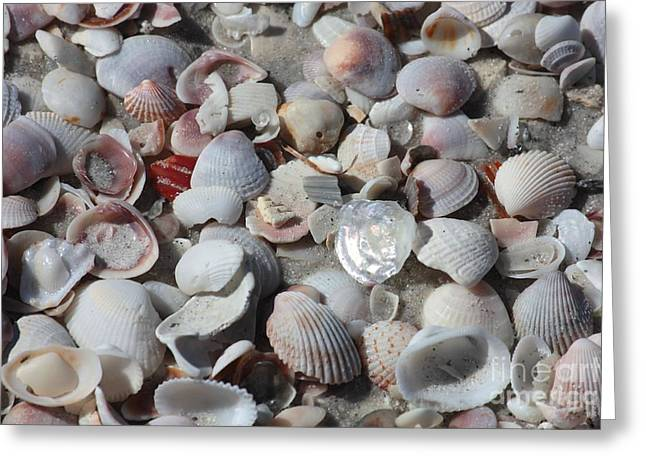Shells On Treasure Island Greeting Card by Carol Groenen