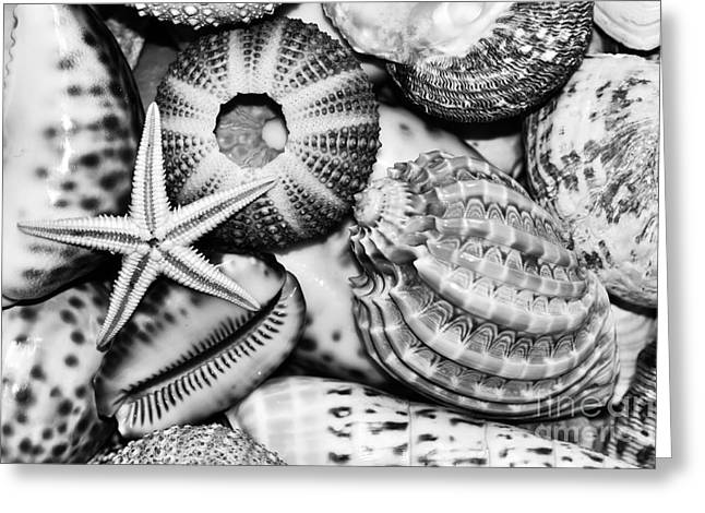 Shellscape Greeting Cards - Shellscape in Monochrome Greeting Card by Kaye Menner