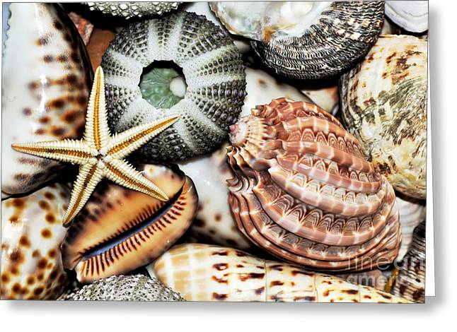 Shellscape Greeting Cards - Shellscape Greeting Card by Kaye Menner