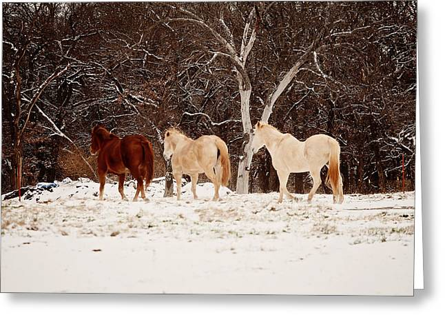 Horse Images Greeting Cards - Shelter from the snow Greeting Card by Toni Hopper