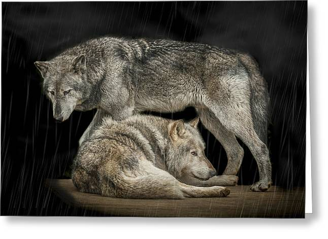 Wolf Portrait Greeting Cards - Shelter Greeting Card by Paul Neville