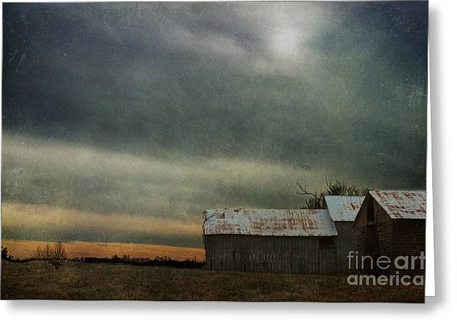Shelter Greeting Card by Terry Rowe