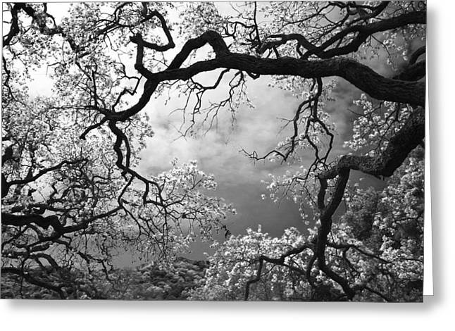 Leaf Abstract Greeting Cards - Sheltering Sky Greeting Card by Laurie Search