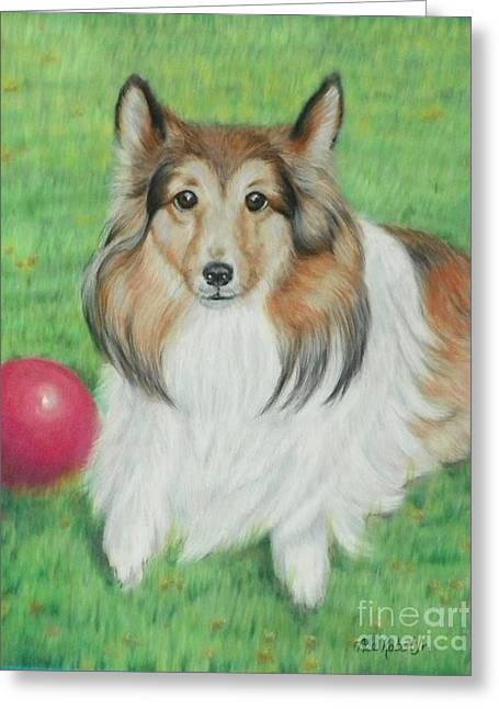 Collie Pastels Greeting Cards - Sheltie Collie Greeting Card by Ace Robst Jr