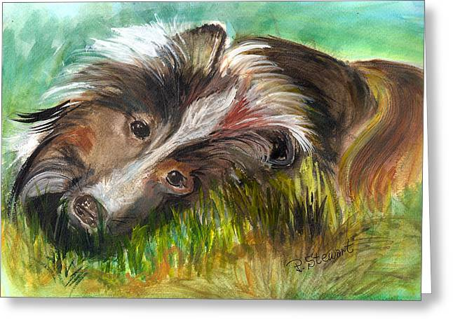 Collie Mixed Media Greeting Cards - Sheltie in the Grass Greeting Card by Penny Stewart