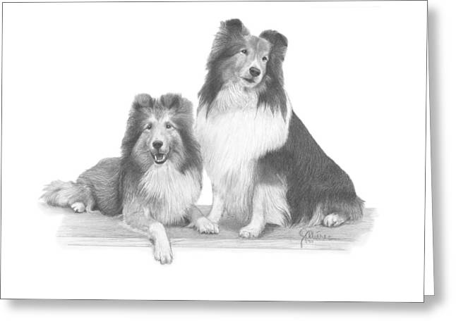 Full Body Drawings Greeting Cards - Shelties Greeting Card by Joe Olivares