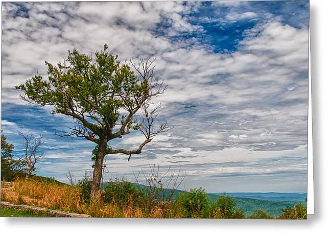 Snow Scene Landscape Greeting Cards - Shenandoah National Park 16554c Greeting Card by Guy Whiteley