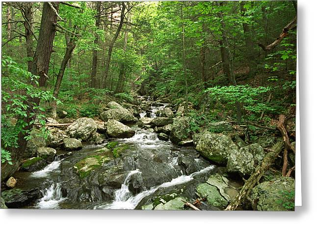 David Yunker Greeting Cards - Shenandoah Stream Greeting Card by David Yunker