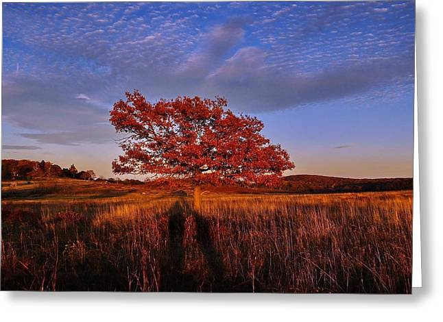 Openness Greeting Cards - Shenandoah Tree Greeting Card by Francie Davis