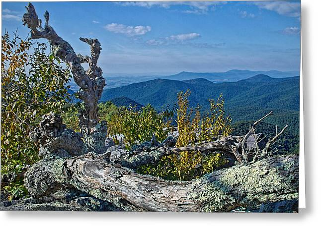 Gnarly Greeting Cards - Shenandoah Vista Greeting Card by Jemmy Archer