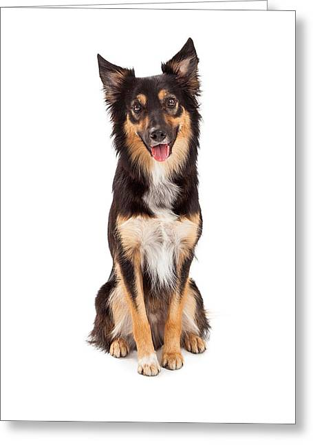 Mutt Greeting Cards - Shepherd and Border Collie Mixed Breed Dog Greeting Card by Susan  Schmitz