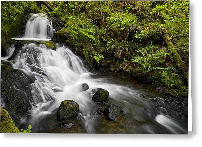 Waterfall Greeting Cards - Shepperds Dell Falls Greeting Card by Andrew Soundarajan