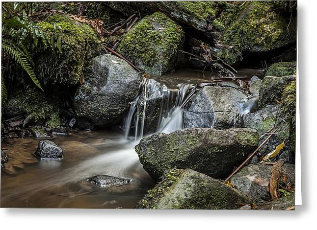 Sherbrooke Creek Greeting Card by Shari Mattox
