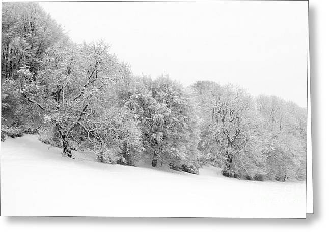 Wintry Photographs Greeting Cards - Shermans Wood Greeting Card by Anne Gilbert