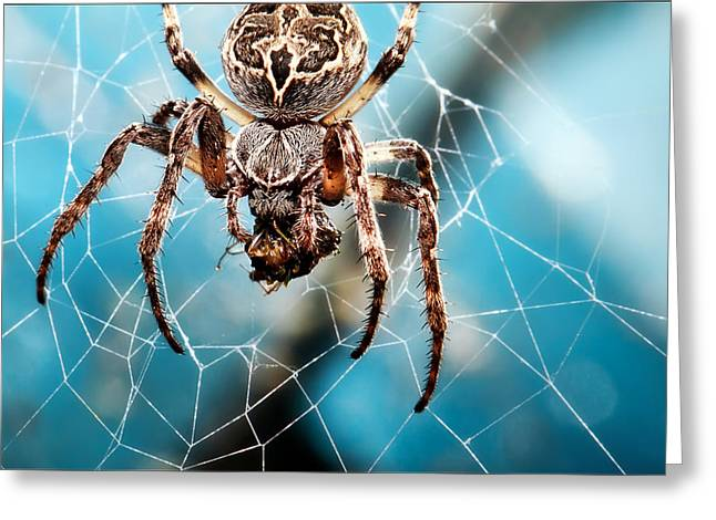 Nobody Greeting Cards - Spiders Web Greeting Card by EXparte SE