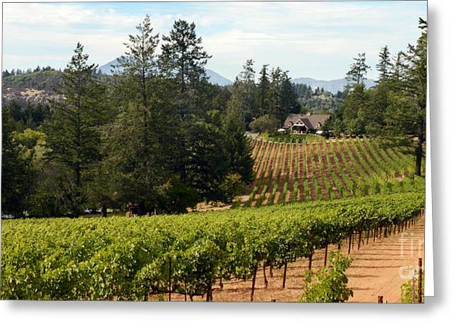 Napa Mixed Media Greeting Cards - Sherwin Family Vineyards Greeting Card by Jon Neidert